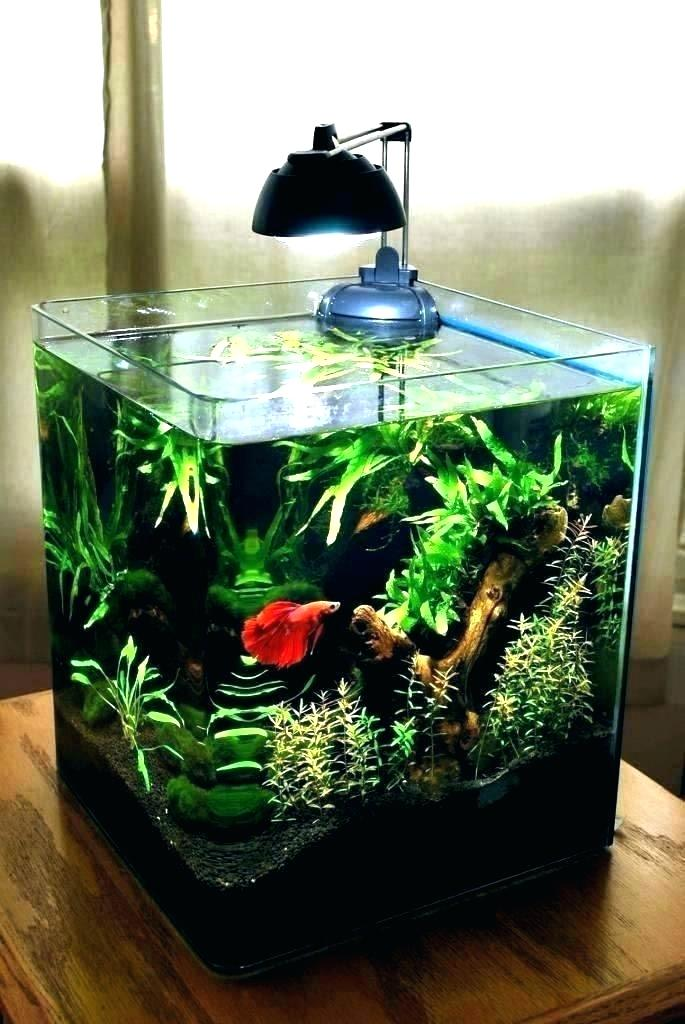 Decoration aquarium design